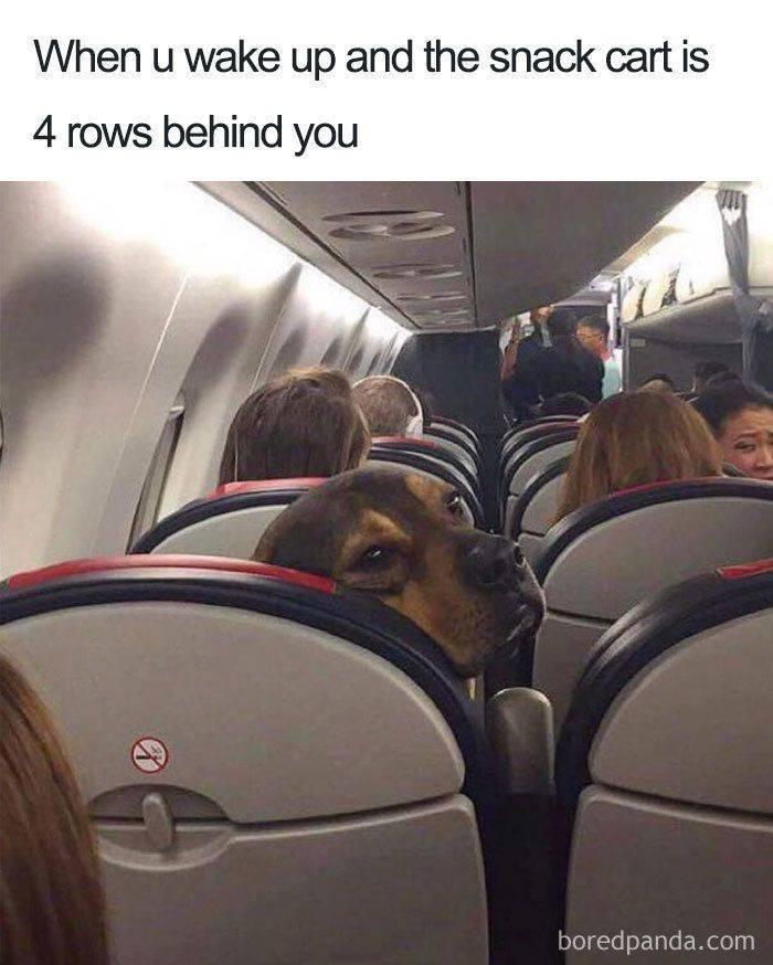 30 Funny Air Travel Memes