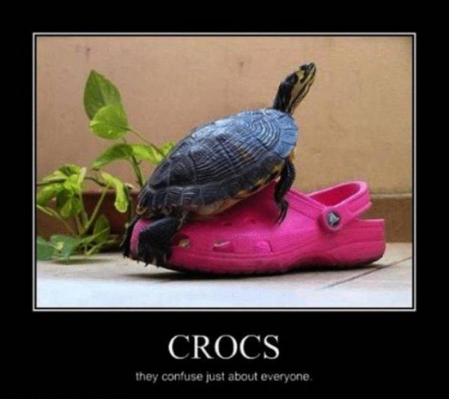 Affiliate Disclosure: 30 Funny Crocs Memes