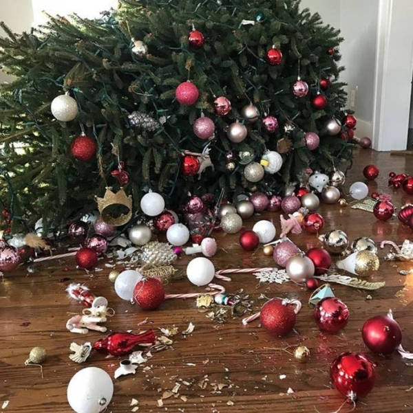 Why Do We Have Christmas Trees For Christmas: 30 Funny Merry Christmas Fails