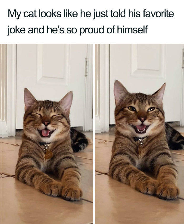 This Cat Is Now The Symbol Of Dad Jokes - Barnorama