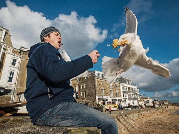 27 Photos Prove That Seagulls Are Real Kleptomaniacs