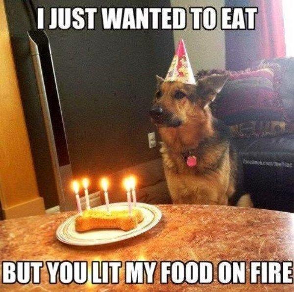 33 Hilarious Dog Memes
