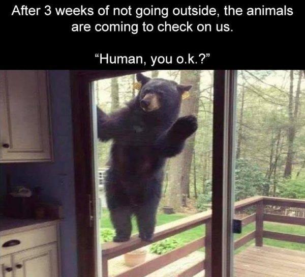 26 Hilarious Quarantine Memes