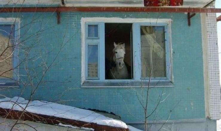 Веселые, интересные и безумные фотографии (81 фото) - Barnorama