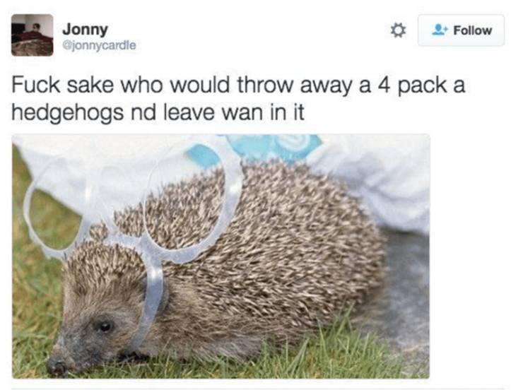 30+ раз, когда шотландский твиттер был веселым - Barnorama