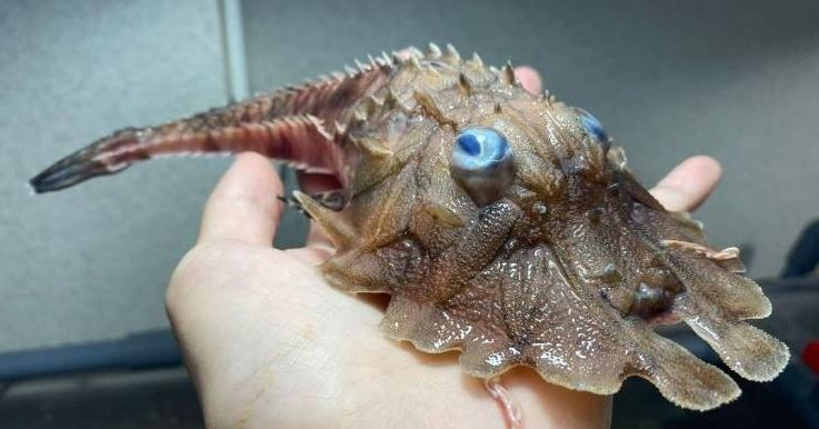 26 Most Unusual Creatures On Planet Earth