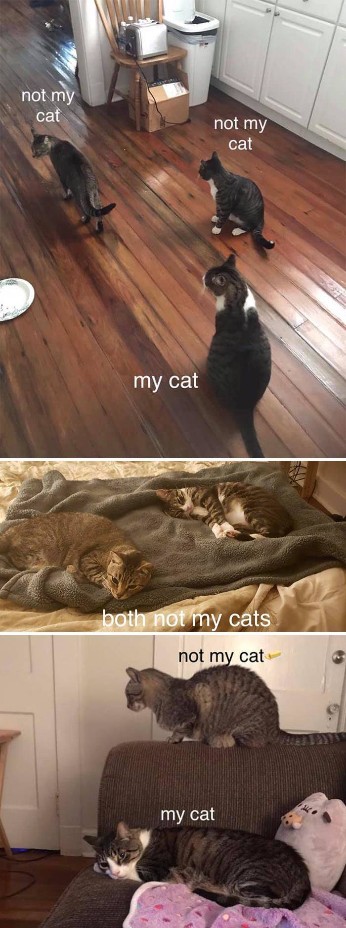 40+ Hilarious 'My House, NOT My Cat' Moments - Barnorama
