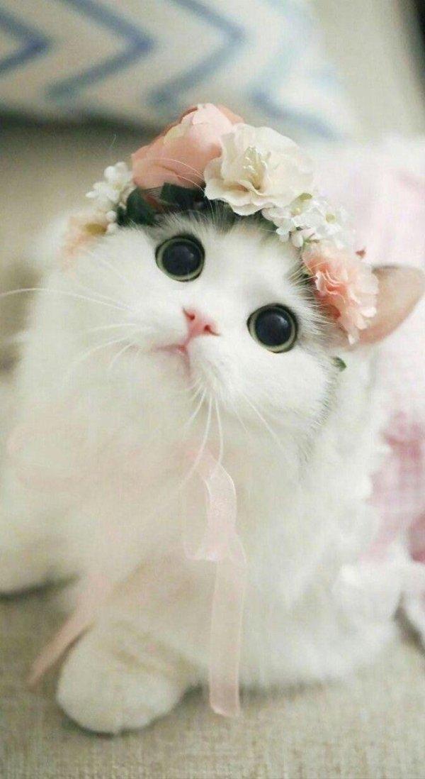 30 фотографий веселых кошек - Barnorama