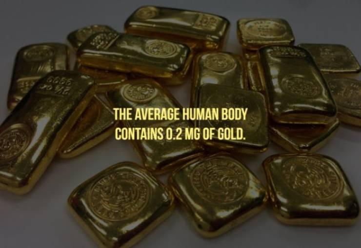 20 блестящих фактов о золоте — Барнорама